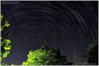 北極星を回る星たち - 野鳥の素顔 <野鳥と日々の出来事>