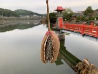 10月19日(月)やらせ画像の投稿 - 庄原上野公園の出来事@広島県