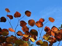 10月21日(水)紅葉3 - 庄原上野公園の出来事@広島県