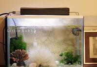 水槽の照明のシェードをプラダンで作り直し - Little hobby