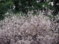 行田前玉神社&古墳公園 - 光の 音色を聞きながら Ⅵ
