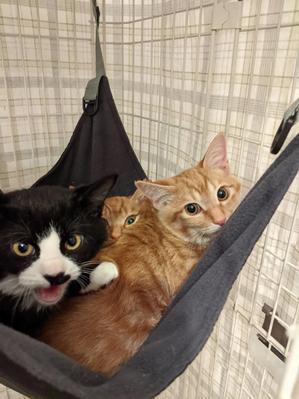 【YouTube】【生後約4ヶ月】残り1匹の兄弟も無事に保護できました! - NPO法人 府中猫の会