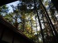 秋深まり・・雪虫が飛び、カラマツも紅葉を始める! - 十勝・中札内村「森の中の日記」~café&宿カンタベリー~