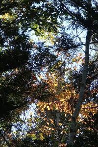 静寂の中にあるもの - 福島県南会津での山暮らしと制作