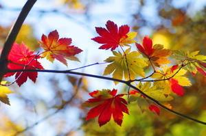 秋の色2 -