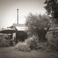 賑わうオープンカフェを不思議に思う樹齢300年のオリーブ - Film&Gasoline