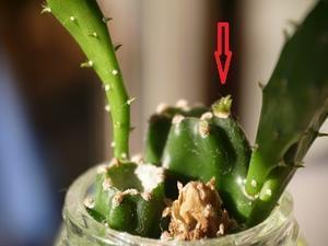 2020年10月20日植物の再生‥‥‥ -