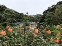 【鎌倉文学館の秋ばら】 - お散歩アルバム・・静かな睦月