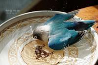 水浴びB.Bの記録(10月15日・18日) - FUNKY'S BLUE SKY