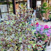 渋さが魅力です^ ^ - ブレスガーデン Breath Garden 大阪・泉南のお花屋さんです。バルーンもはじめました。