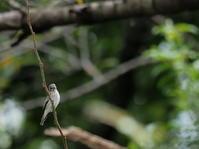 さくら草公園 2020.10.14(2) - 鳥撮り遊び