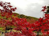 「Go to で紅葉の奥飛騨 信州渋温泉」へ、その2 【新穂高ロープウェイ しらかば平駅】(2020年10月) - 空とグルメと温泉と