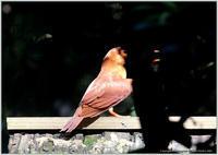 アカショウビンを間近で - 野鳥の素顔 <野鳥と日々の出来事>