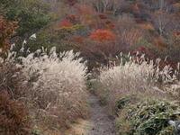 富士山と紅葉(1) ~赤城山小沼~ (2020/10/20撮影) - toshiさんのお気楽ブログ