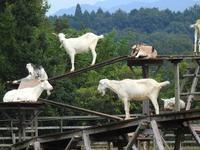 『里山ふれあい牧場の動物達~』 - 自然風の自然風だより