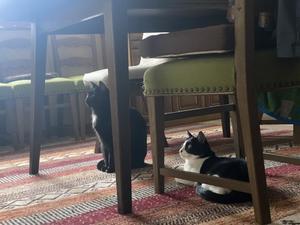 興味をもつ猫たち - gin~tetsu~nosuke