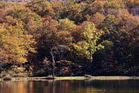 糸魚川市蓮華白池の紅葉その4 - 日本あちこち撮り歩記