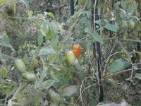 ほうれん草の定植と種まき - 自然農☆☆☆菜園日記