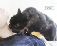 猫エステ - ちいさなチカラ