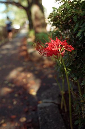 10.20(付録) - anemone