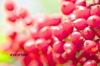 近郊の秋(その25) - ジージーライダーの自然彩彩