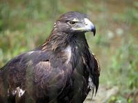 八木山動物公園の猛禽類たち - 動物園放浪記