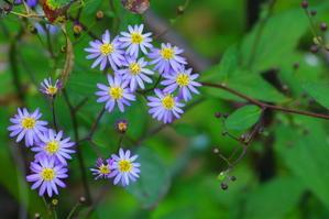 秋の色3 - 花と猫と山