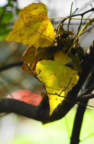 秋の色4 - 花と猫と山