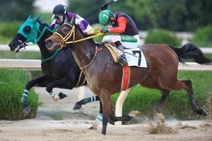 2020 10/21 8R京都畜産特別 C1 - 園田競馬写真館「ここがゴール」