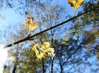 秋の栞 - monn-sann