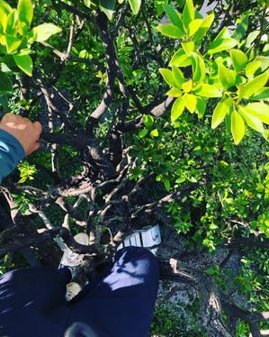 脚立の届かない木の上から - 目黒区 都立大の 花屋  moco    花と 植物で楽しい毎日     一人で全力で営業中