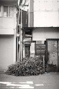 植物都市 - Life with Leica