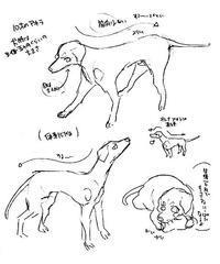 恋犬21話のこと - 山田南平Blog