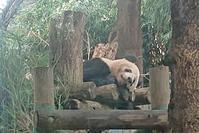 遠足日和 上野動物園に行ってきました - 緑のかたつむり