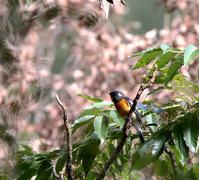 ムギマキ山に出かけてみたが・・・ - 一期一会の野鳥たち