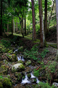 雨上がりの古知谷阿弥陀寺 - デジタルな鍛冶屋の写真歩記