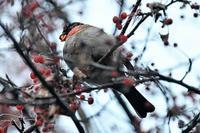 戦場ヶ原❸ - そらと林と鳥