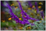 秋の紫な花 -  one's  heart