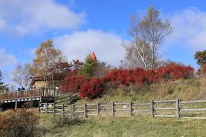 赤城山の紅葉真っ盛り 1・・・白樺牧場 - 四季折々