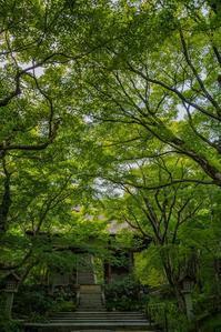 深緑の常寂光寺 - 鏡花水月