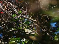 2020年10月21日築館の森~山を下りてきた野鳥達~ - htt's fieldⅡ