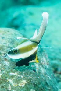 パカッ - Diving Life ~Aita pe'a pe'a~