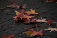 雨が季節を連れてくる20201023 - Yoshi-A の写真の楽しみ