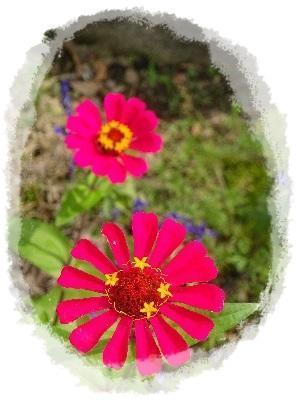 お花&ペット -