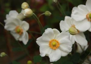 秋の花盛り -