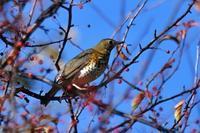 戦場ヶ原最終回 - そらと林と鳥
