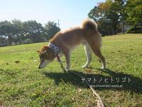 いつもの公園。 - yamatoのひとりごと