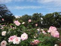 PCが直りました~♡&植物園の秋バラ2020 - 健康で輝いて楽しくⅢ