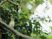 秋ヶ瀬公園・ピクニックの森 2020.10.20(1) - 鳥撮り遊び