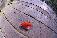 落ち葉 - さぬき風花
